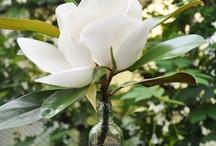 Magnolia Grandiflora Decor / by Silverbox Creative Studio