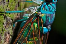 Bugs / by Kathy Weiss Linthicum