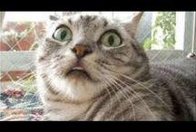 lustige Katzen / Hier gibt´s lustige Katzenbilder