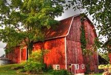 Barns. / by Paula Gushard