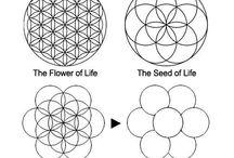 Flower of live