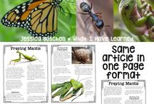 Reading: informational / Nonfiction informational lessons, anchor charts, ideas, freebies, activities, and games for 2nd, 3rd, and 4th common core.