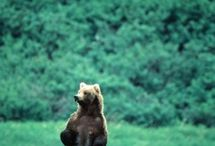 Bears ... real ones! / by Rosey Day