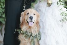 Wedding Pets / Your pets are family, so it's always special to Include them in your wedding.