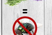 Kill pests