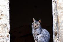 Gatos / cats
