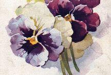 Menekşe - Violet- Pansy
