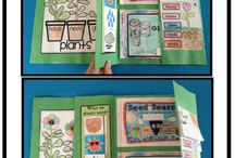 Second Grade Life Cycles Theme / by Anne Merkel