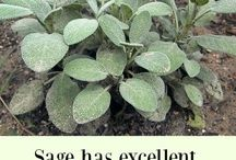 Herbs & Plants / Posts about herbs, herbology and plants.