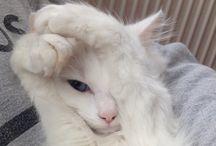 LOVING CATS / CATS