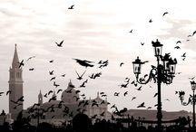 Galambok Velencében / A Szent Márk-tér nemcsak a turisták, hanem a galambok kedvenc gyülekezési helye is. Az alábbiakban néhány vicces fotót találhattok.