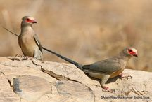 Namibia / Images from some of our birding tours to Namibia