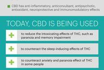 CBD - Cannabinol