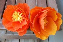 Optimistic Orange