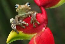 Frog-žaby