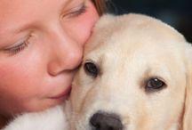 Doggie Health / by SomePuppyToLove
