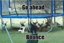 Trampoline Funnies