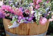 Blomsterkasser/urner