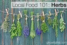 Herbs. Urter