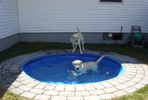 For the Fur Babies / In ground pool for the pups