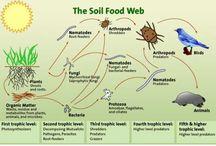 gardening/ecosystems