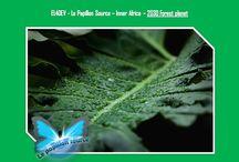 EL4DEV - Le Papillon Source Inner Africa (English) - Elvere DELSART