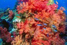 A vizek fantasztikus élővilága