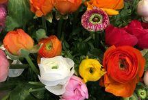 Fleurs de saison : janvier