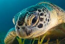 Zwierzęta morskie