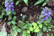 Oman pihan kasvit / Puutarhasta koottua