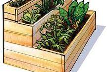 vegetarian gardens