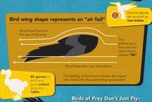 Birds: Feathers & Flight