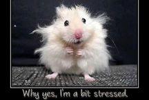 a hamster onle