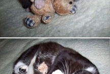 Kitten and cats