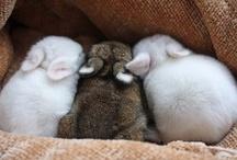 Bunnypaaaaaws