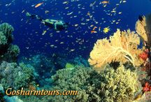 Intro dive course and snorkeling from Sharm el Sheikh