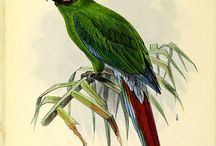 Antique Bird Illustrations