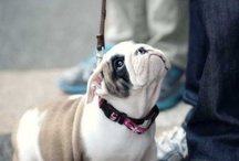 Bulldog love / by Camille Bausone
