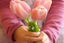 Flores: Tulipas