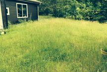 Godset  / Det gror godt det græs
