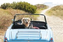 Dogs, Cars & Bikes...
