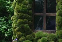 garden , patio , outdoor / by anna prihodko