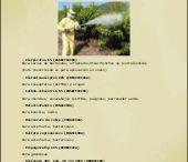 Recomendaciones Plantaciones Pistacheros