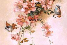 ЦВЕТЫ\ШИПОВНИКИ  FLOWERS\WILD ROSES