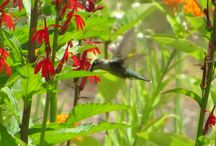 Wildlife / Plant native plants and attract myriad forms of wildlife.