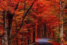 Autumn - Automne
