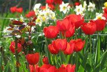 Virágaim