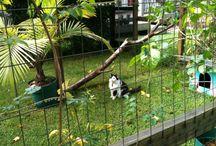 Animal Runs/Cages