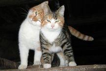 .cats.