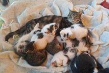 ❤_My Cats_❤ / kucing yang lucu